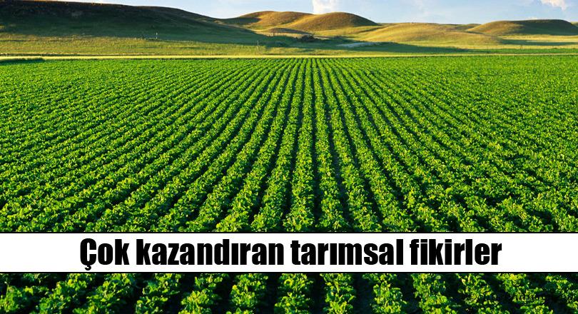 Tarımsal iş fikirleri